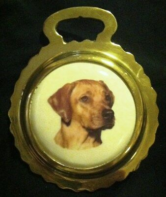 NEW DOG RHODESIAN RIDGEBACK Ceramic Horse Brass RIDGEBACK Lover! WOW YOUR WALLS!