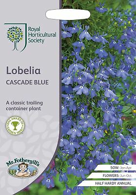 Mr Fothergills -  Flower - RHS Lobelia Cascade Blue - 2500 Seeds