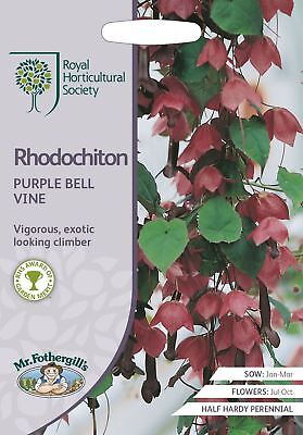 Mr Fothergills -  Flower - RHS Rhodochiton Purple Bell Vine - 15 Seeds