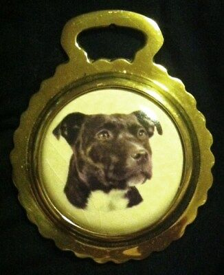 NEW STAFFORDSHIRE BULL TERRIER DOG Ceramic Horse Brass DOG gift! WOW YOUR WALLS!