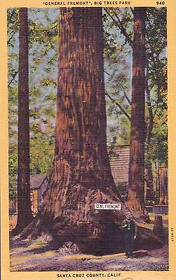 1940's General Freemont Big Trees Park Santa Cruz  California vintage postcard