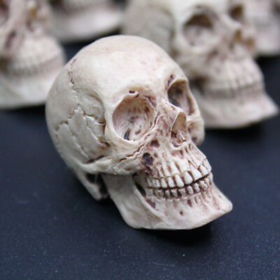 1 Pcs 1/6 Resin Made Anatomical Skull Head Scenes Accessories for 12in. figures