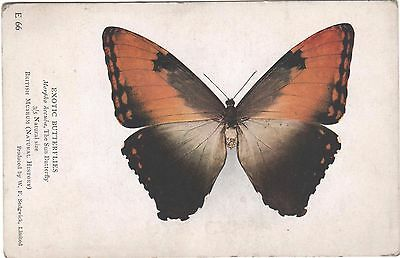 Vintage Postcard Exotic Butterflies Natural History Museum E 66 Butterfly