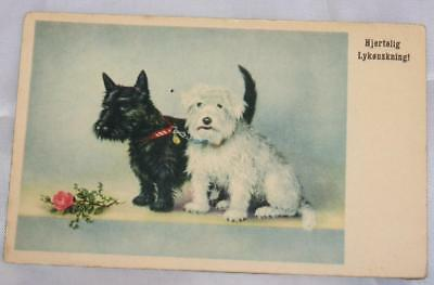 Vintage Scottish Terrier Dog Postcard European Never Mailed Rose Plus White Dog