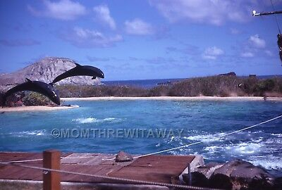 1968 COLOR SLIDE TRANSPARENCY Hawaii Oahu Sea Life Park Dolphins #2