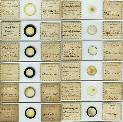 12 Plant Pollen Microscope Slides by J.T. Brownell (American)
