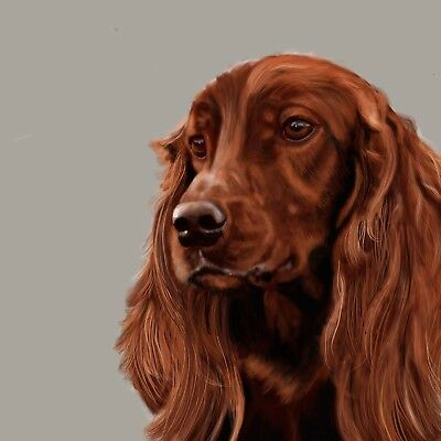 "Limited Edition Print - Irish Red Setter 12""x12"""