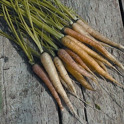 Vegetable - Carrot - Rainbow Mixed - 500 Seeds