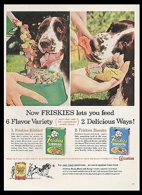 1960 Springer Spaniel photo in color Friskies dog food vintage print ad