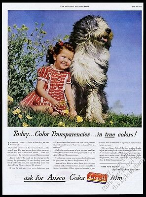 1945 Old English Sheepdog and girl photo Ansco camera film vintage print ad