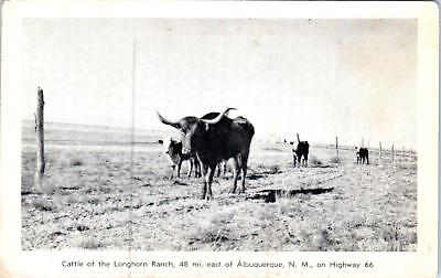 MORIARITY, NM New Mexico  CATTLE on the LONGHORN RANCH Rt 66 Roadside c1950s
