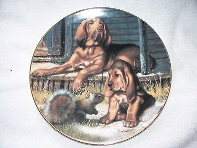 Who's Tracking Who A Sporting Generation Jim Lamb Bloodhound Dog Plate