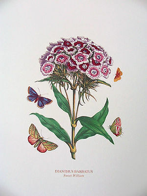 3 PORTMEIRION BOTANIC GARDEN FLOWER PRINTS PICTURES Christmas Rose/Sweet William