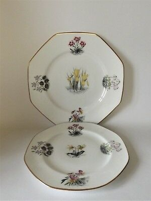 TWO ROYAL WORCESTER FLORAL DECORATED PLATES 220 & 265mm ACROSS IMMACULATE