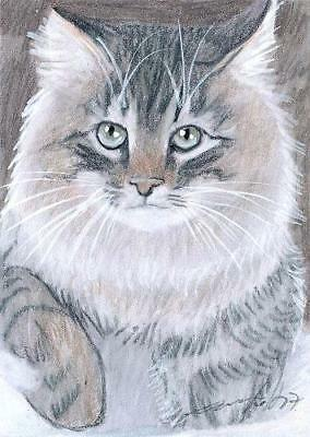 ACEO original pastel drawing maine coon cat winter by Anna Hoff