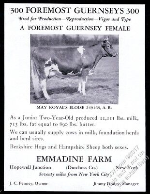 1932 Guernsey cow photo Emmadine Farm NY cattle breeder vintage print ad