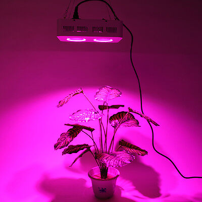 200W/400W/800W COB LED Grow Light Lamp Full Spectrum For Plant Growing Flowering