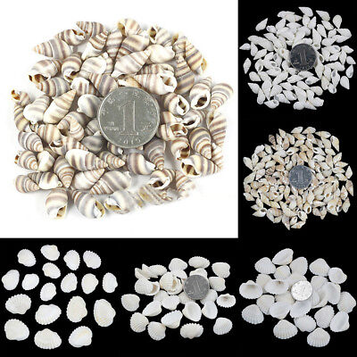 50pcs Natural Seashells Conch Shells Sea Shell Jewelry DIY Handmade Crafts Decor