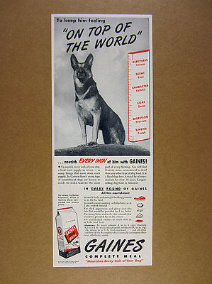 1946 German Shepherd photo Gaines Dog Meal Food vintage print Ad