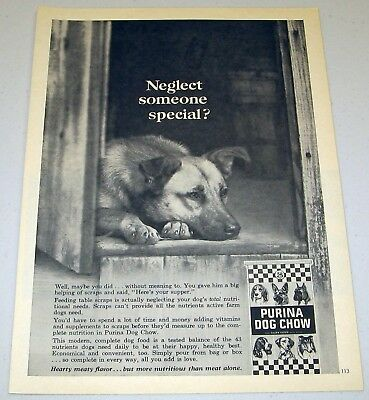 1966 Print Ad Purina Dog Chow Dog Feels Neglected