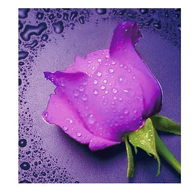 "Diamond Painting - Diamant Malerei - Stickerei - ""Rose"" - Set - Neu (568)"
