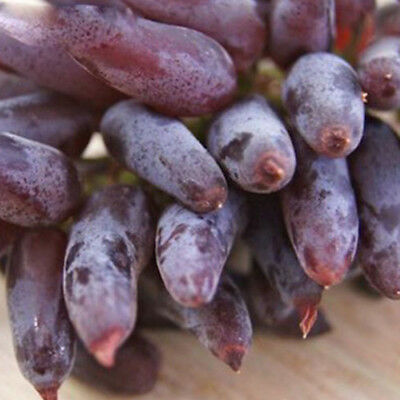 50Pcs Rare Finger Grape Seeds Advanced Fruit Natural Growth Delicious Balcony PH