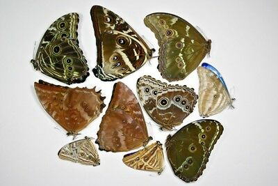 10 Mixed Morphos in A1 condition