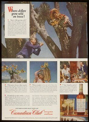 1948 Canadian Club whisky wild orchid harvest photo vintage print ad