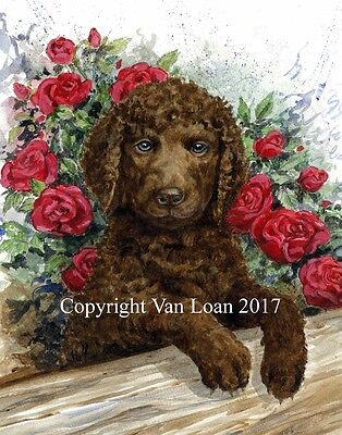 Irish Water Spaniel watercolor puppy in roses