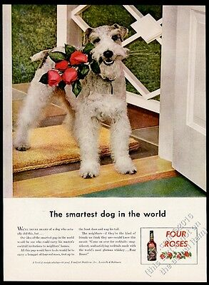 1943 Fox Terrier photo Four Roses whiskey vintage print ad