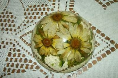 Vintage Chic Retro Lucite Dome Paperweight Real Daisies Shabby Cottage Nice
