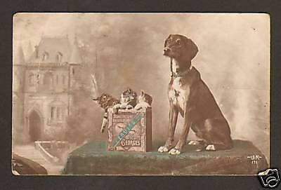 "Boite Biscuits ""georges"" / Chatons - Chats & Chien 1915"