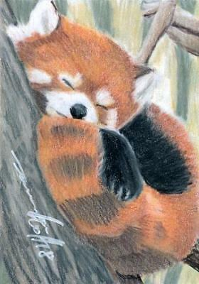 ACEO original pastel drawing fire fox red panda wildlife by Anna Hoff