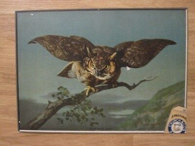 Large Arm and Hammer horned owl sign-Gustave Muss-Arnolt + 14 Useful Bird cards