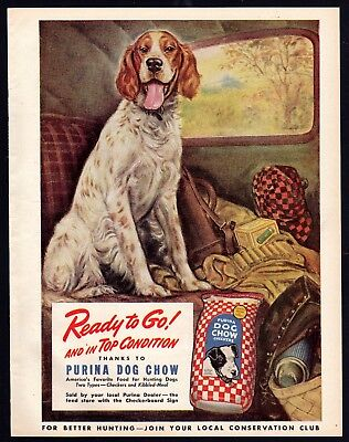 1944 ENGLISH SETTER Hunting Dog Art..ready to go WWII Purina Dog Chow Vintage AD
