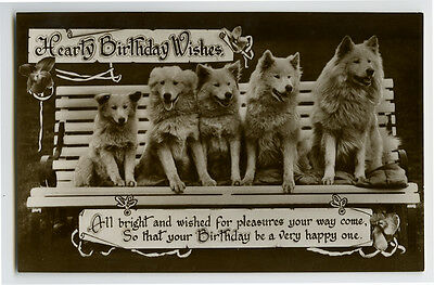 c 1930 Cute Dogs SAMOYED on Bench photo postcard