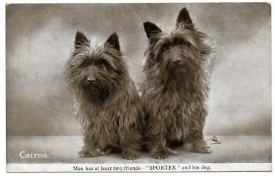 Early  CAIRN TERRIERS  Dog   Postcard