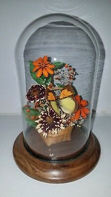 """Vintage: 8"""" x 5.5"""" GLASS DOME OVER BUTTERFLY AND FLOWERS   180101005"""