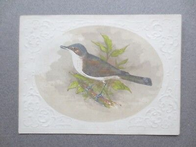 VICTORIAN SCRAP Cut Out Engraving White Throat Bird Embossed Card Leafy Branch