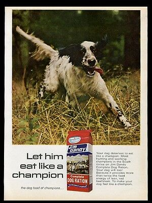 1968 English Setter nice color photo Jim Dandy dog food vintage print ad