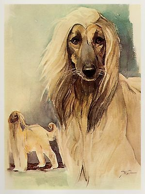 Vintage AFGHAN HOUND Dog Print Gallery Wall Art  Beautiful Art Print 2588