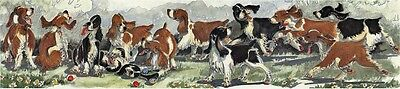 Enid Groves English Springer Spaniel Print