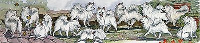 Enid Groves American Eskimo Dog Print