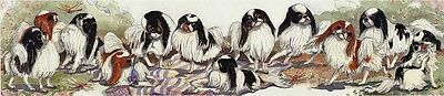 Enid Groves Japanese Chin Print
