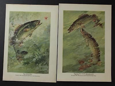 LOT of TWO 1920s GAME FISH PRINTS~NORTHERN PIKE~BASS~WALLEYE