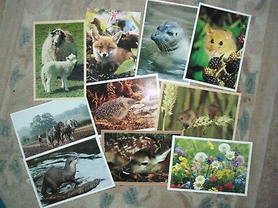 Collection of British wildlife postcards 9 post cards in total all different NEW