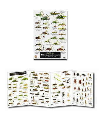 Guide to British Grasshoppers Laminated Identification Chart Field Guide Poster