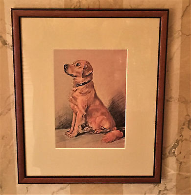 "Lucy Dawson Golden Retriever Framed Print - Professionally Framed 16.5"" x 13.5"""