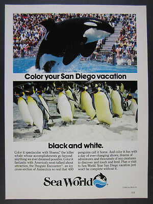 1985 Shamu killer whale photo SeaWorld Sea World San Diego vintage print Ad
