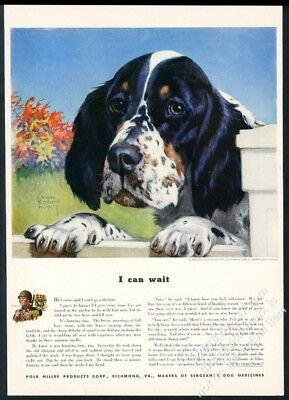 1942 English Setter art by Lynn Bogue Hunt Sergeant's dog medicine print ad